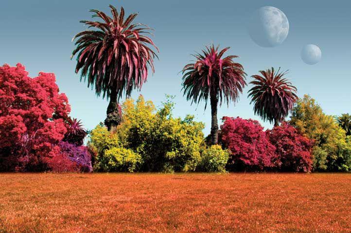 Plants Under Alien Suns